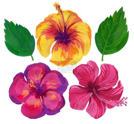 watercolor flower set of hibiscus