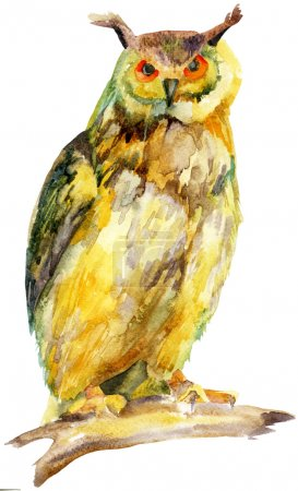 watercolor owl on a branch