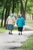 from behind two elderly women walk along a forest trail