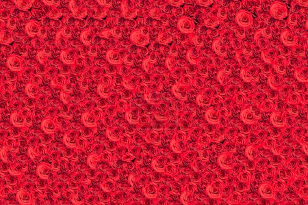Photo for Million red roses background - Royalty Free Image