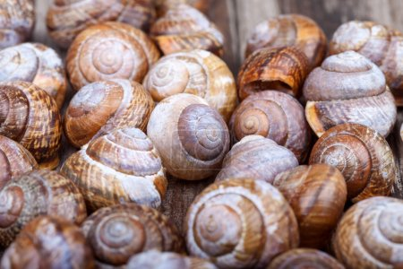 Brown spiral shells on a wooden board decorative photo