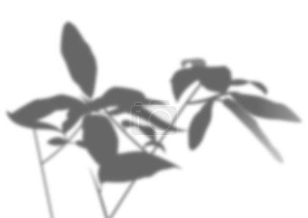Illustration pour Ombre transparente superposée à partir d'une branche de feuilles. Une silhouette de branches. Soleil naturel. - image libre de droit