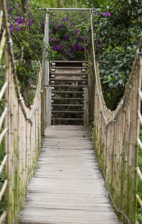Suspended bridge at natural rain forest