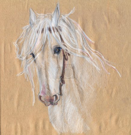 Colored pencil drawing of a white horse.Beautiful eyes.