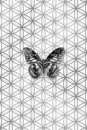 Photo pour Papillon aquarelle en niveaux de gris sur un motif de fleur de vie, symbole de géométrie sacrée. Des dessins spirituels. Affiche, carte, pancarte. Illustration d'art moderne tendance . - image libre de droit