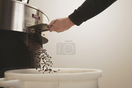 Roaster hand opens hatch fresh coffee beans fall basket