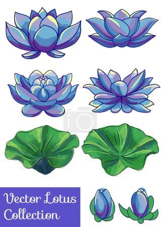 lotus flower set