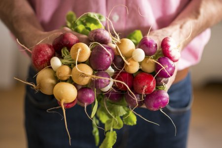 CLose up of Radishes in a Mans hands