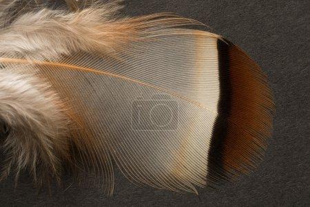 stock@photographyfirm.co.uk