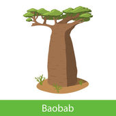 Baobab cartoon tree Single illustration on a white background
