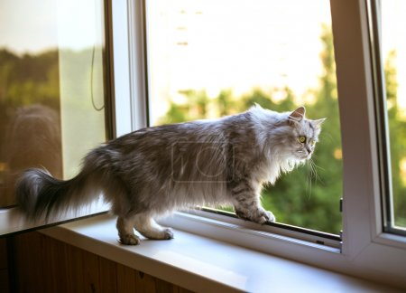 Hermoso gato gris sentado en el alféizar de la ventana y mirando por una ventana
