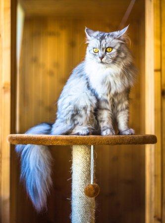 beautiful grey cat sitting on windowsill