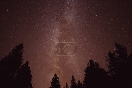 Milky Way and some trees