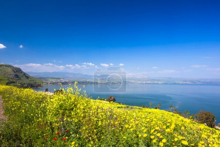 Yellow flowers near sea of Galilee