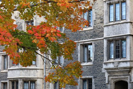 Photo for Maple tree with glorious fall colors in front of gothic style stone college building - Royalty Free Image