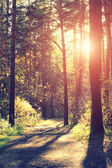 Autumn forest scenery with rays of warm light illumining the gol