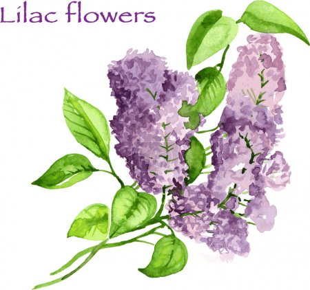 Blooming lilac branch pattern. Pink and violet watercolor flowers isolated on white background. Floral pattern.