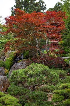 Photo pour Jardin de thé japonais - image libre de droit