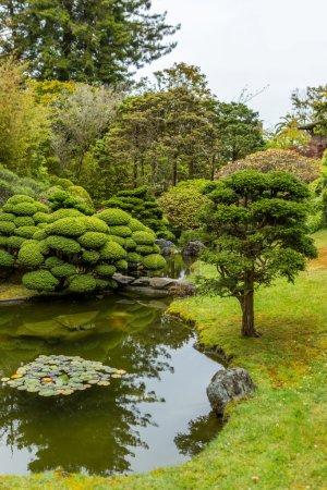 Photo pour Jardin de thé japonais en été. - image libre de droit
