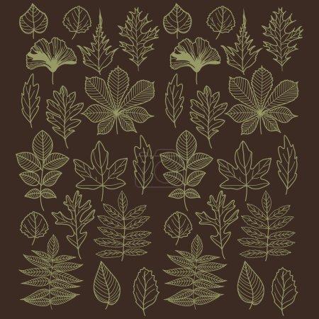 feuilles de différentes formes de différents arbres
