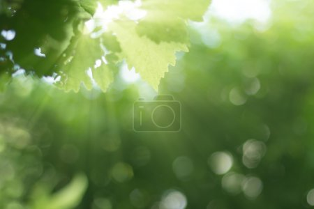 Photo for Rays sunrise with green plant blurred forest background - Royalty Free Image