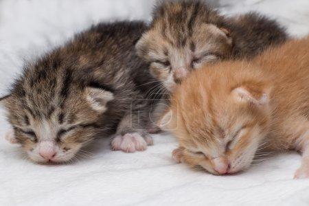 Lovely kittens newborn sleeping on white carpet