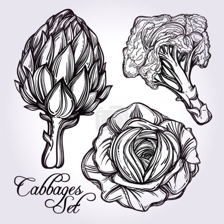 Hand drawn vegetables set.