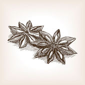 Star anise hand drawn sketch style vector