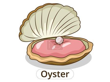 Oyster underwater animal cartoon illustration
