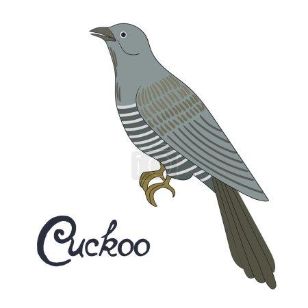 Bird cuckoo vector illustration