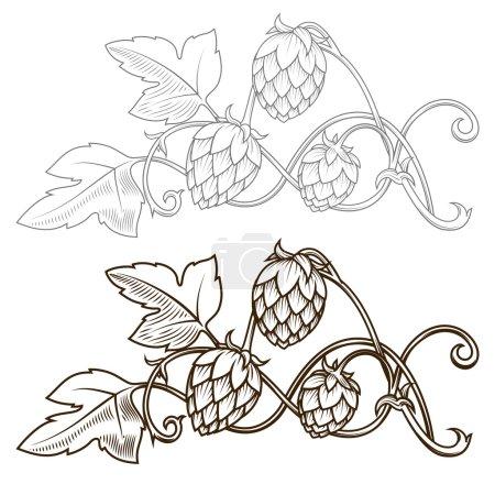 Hops ornament vector illustration