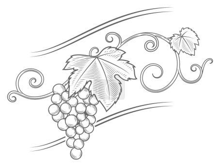 Illustration pour Grape branches de vigne ornement vectoriel illustration. Style gravure. Couleur marron - image libre de droit