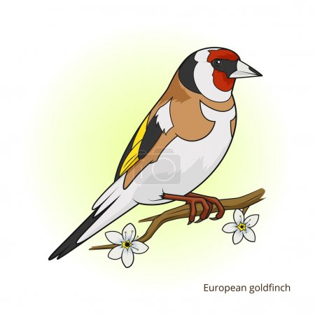 European goldfinch bird learn birds educational ga...