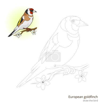 European goldfinch bird learn to draw vector
