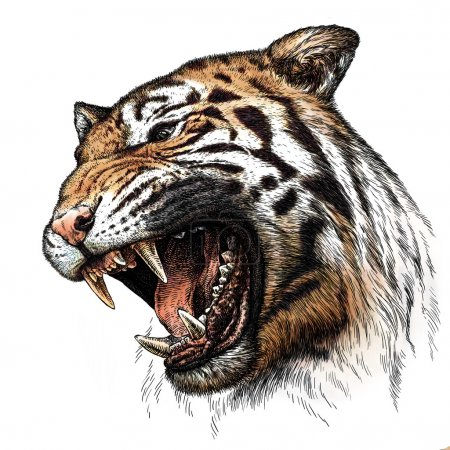 engrave tiger illustration