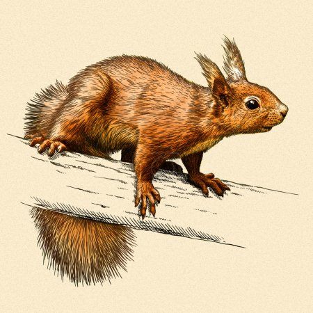 Photo for Engrave isolated squirrel illustration sketch. linear art - Royalty Free Image