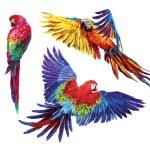 Постер, плакат: Colorful realistic parrots macaw