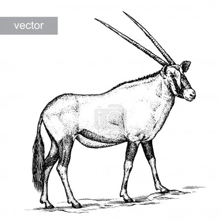 Illustration for Engrave isolated antelope vector illustration sketch. linear art - Royalty Free Image