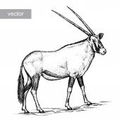 Engrave isolated antelope vector illustration sketch linear art