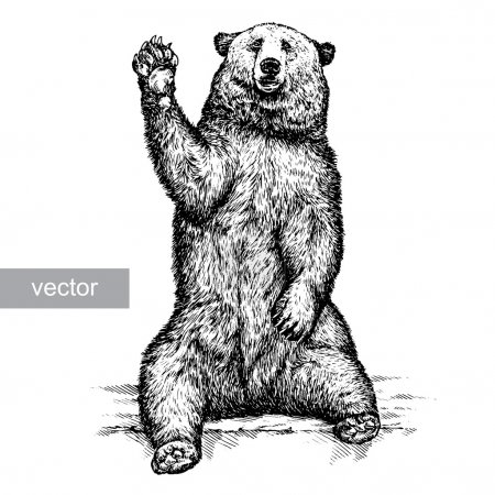 Illustration for Engrave isolated vector bear illustration sketch. linear art - Royalty Free Image