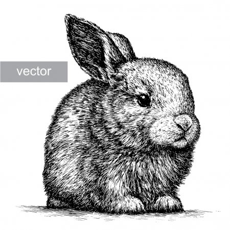 Illustration for Engrave isolated rabbit illustration sketch. linear art - Royalty Free Image