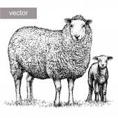 Engrave isolated vector sheep illustration sketch linear art