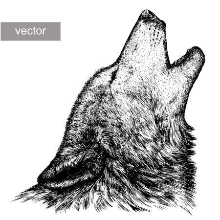 Illustration pour Graver isolé vecteur loup illustration croquis. art linéaire - image libre de droit