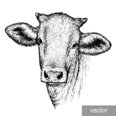 Illustration pour Graver une illustration vectorielle de vache isolée. art linéaire - image libre de droit