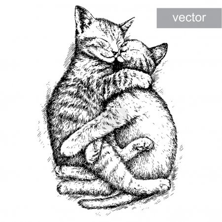 Illustration for Engrave isolated kitten vector illustration sketch. linear art - Royalty Free Image