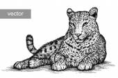 Engrave isolated vector leopard illustration sketch linear art