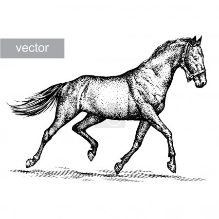 Illustration for Engrave isolated horse vector illustration sketch. linear art - Royalty Free Image