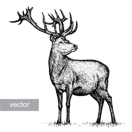 Illustration for Engrave isolated deer vector illustration sketch. linear art - Royalty Free Image