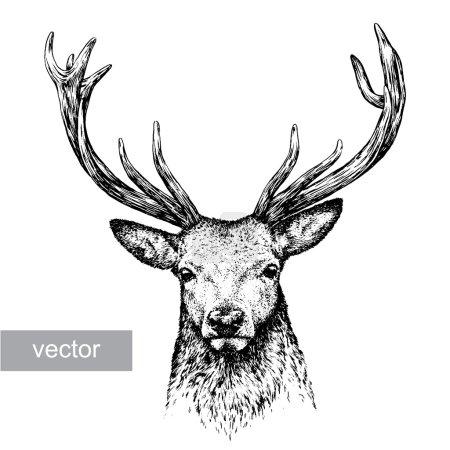 Illustration pour Graver une illustration vectorielle isolée de cerf. art linéaire - image libre de droit