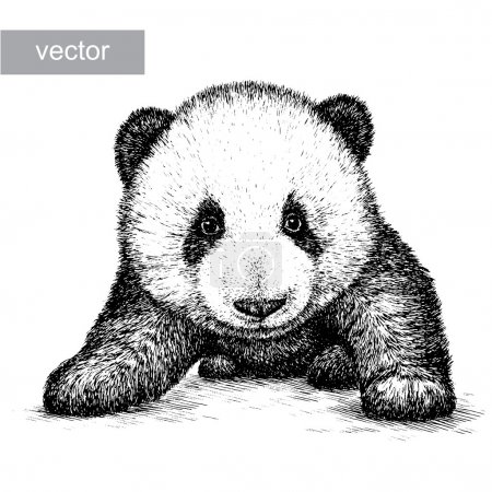 Illustration for Engrave isolated panda bear vector illustration sketch. linear art - Royalty Free Image